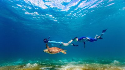 Family snorkeling with sea turtle Underwater photo of family mother and son snorkeling and swimming with Hawksbill sea turtle