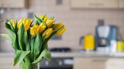 yellow tulips on kitchen background fresh yellow tulips on kitchen background