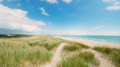 Dune grass on the beach Dune grass on the beach