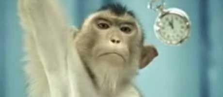 En hypnotiserende apekatt og litt av hvert annet.