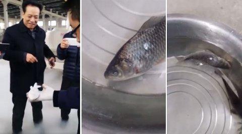 Videoen, som sprer seg i stor fart på internett, viser en tilsynelatende nedfryst fisk som puttes i vann for deretter å våkne til liv.