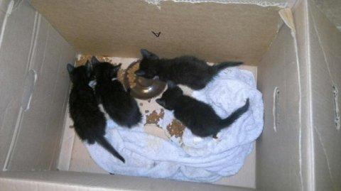 DUMPET: Denne esken ble de fire tamme kattungene satt i sammen med moren sin. Deretter ble esken teipet igjen, og satt ut i skogen. Nå tror Dyrebeskyttelsen at de vet hvem som gjorde det.