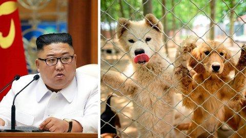 Nord-Koreas leder Kim Jong-un skal ha beordret alle som har hunder som kjæledyr om å levere dem inn. Illustrasjonsfoto.
