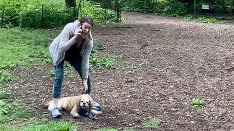 Videoen av Amy Cooper, som hevdet å bli truet av en svart fuglekikker i Central Park i New York, gikk verden rundt. Foto: Christian Cooper / AP / NTB