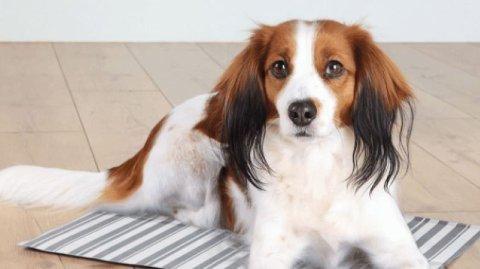- UANSVARLIG: Veterinær mener at altfor mange ikke klarer å ta vare på hunden sin.