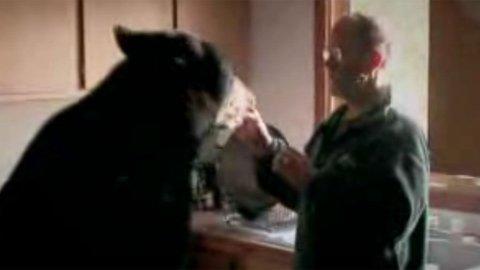 Mann lever med bjørner