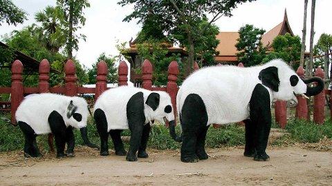 HMMM...En svarthvit elefantpandafamilie? Nei da, elefantene bare feirer at en ny pandaunge har kommet til verden.