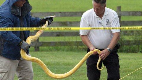 Slange drepte toåring