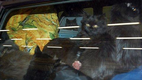 TRANGT OM PLASSEN: Smuglede katter stuet i tyskerens bil