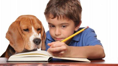GOD HJELP?: Hunder flest er like smarte som to år gamle barn, leksehjelpen på bildet er utelukkende av symbolsk karakter.