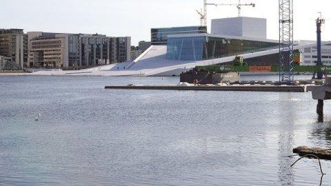 URBAN FISK: Torsken gyter ivrig i indre Oslofjord.