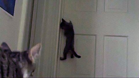 CAT BURGLAR: Man trenger ikke tomler for å åpne en dør.