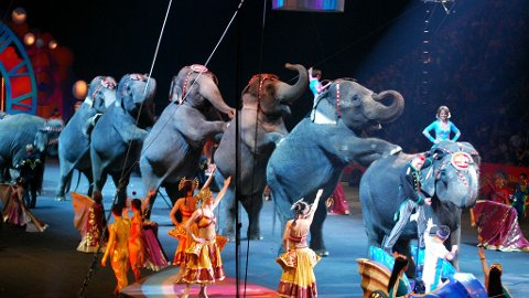 FORBYS: Hvis du vil se elefanter på sirkus i framtida, må du gjøre det i utlandet.