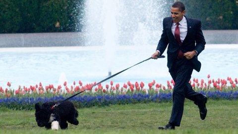 FULL FART: Livet er stas når Bo kan leke i hagen med Barack Obama. Men hva når eierne er borte?