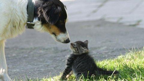 BEST: Hunder er bedre kjæledyr enn katter, det har forskerne kommet fram til.