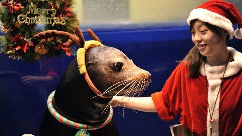 RUDOLF? : Julepyntet sjøløve fra Tokyo.
