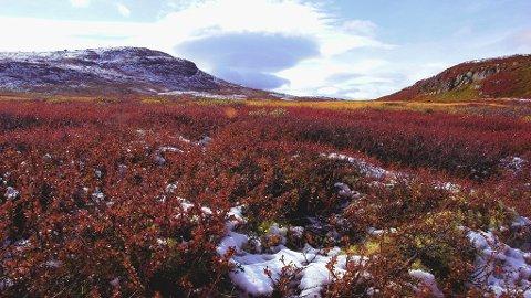 Bergsjø er en av våre anbefalte områder å gå i fjellet i høst.