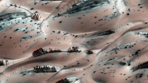 De mørke strekene er ikke trær på Mars. Det dreier seg derimot om mørk sand som har rast ned fra toppen av rosa sanddyner med stedvis rim. Høyoppløsningskameraet sitter i Mars Reconnaissance Orbiter som går i bane 250-316 km over planeten.