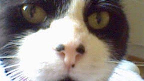Tassen (13) forsvant for to år siden. Han har trolig ikke beveget seg så langt, men ble likvel gjenforent med eieren på Storetveit.