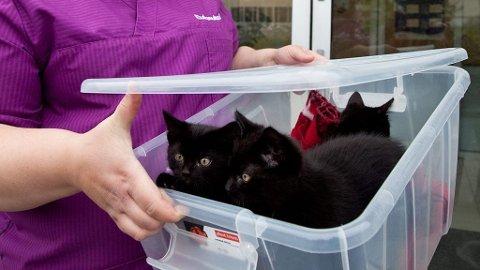 FORLATT: Kattungene ble forlatt i en plastkasse.