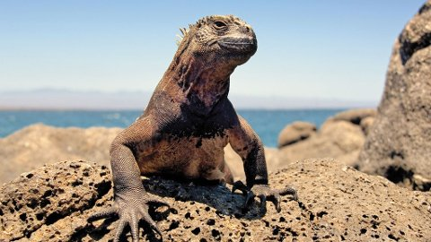Galapagos er det rike dyrelivets øygruppe.