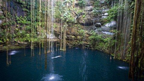 Cenotene i Yucatán er deilige oaser i jungelens grønne vrimmel.