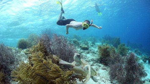 Bonaire tar seg aller best ut under vann.