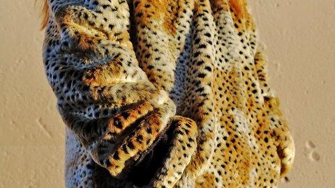 NORSK PELSDYRALSALG mener pelsdyrnæringen blir fremstilt på feil måte. Her er pelsjakken som Jan Vardøen i regi av Dyrevernalliansen pakket inn til politiker Siv Jensen for å oppfordre til en avvikling av pelsnæringen.