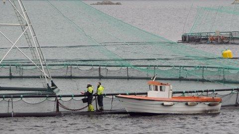 VRAKER: Regjeringen vraker rødgrønn plan om å endre mengden fisk oppdretterne kan ha i merdene. Bildet er av Sjøtrolls oppdrettsanlegg Skjerholmen på Buarøy sør for Flesland.