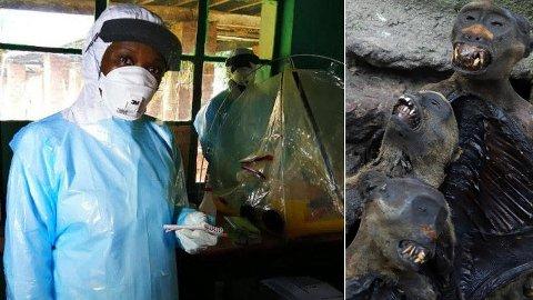 Forskere tror at såkalt bushmeat kan være en smittekilde til ebola-viruset. Bildet til høyre viser røkte apekatter som blir solgt på et marked i millionbyen Mbandaka. Bidlet til venstre viser en kongolesisk forsker i et provisorisk laboratorium i Bikoro i nordvestlige Kongo, hvor ebola-epidemien startet i april måned.