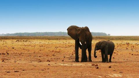 NEDGANG: Populasjonen blant ville dyr har gått drastisk ned siden 1970.