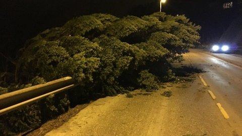 BLÅSTE UT I VEIEN: Kraftige vindkast skaper problemer på Vestlandet. Onsdag kveld blåste et tre ut i veien i Sædalen i Bergen kommune.