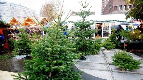 DU GRØNNE, GLITRENDE: Edelgran er mest populært som juletre, mens vanlig gran fortsatt står sterkt hos nordmenn. Prisene varierer imidlertid etter hvor du bor.