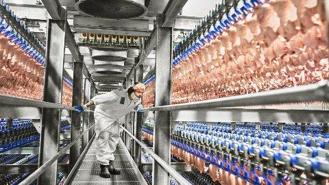OVERPRODUKJON: Nortura har tonnevis med kjøtt på lager etter overproduksjon. Nå ønsker Nortura masseslakt av verpehøner. Her fra Norturas fabrikk på Hærland.