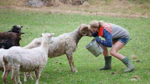 KYSS: Kathrine Sørland kysset en sau under Farmen-oppholdet.