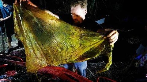 MYE PLAST: Hvalen var full av plast da han ble funnet død på Filippinene.