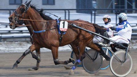 Enzo Am kommer ut i den siste V65-avdelingen, og vi tror det er snakk om en god vinnersjanse. Foto: Anders Kongsrud/ www.hesteguiden.com.