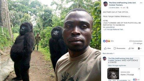 Dette bildet av de to poserende gorillaene går viralt.
