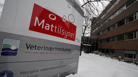 AVLIVING: 100 okser ble fredag tatt ut fra en gård i Solør av Mattilsynet.