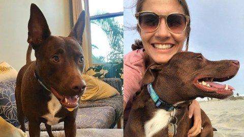 Christina Hunger har lært hunden Stella å kommunisere gjennom knapper. Nå vil hun lære flere hunder å «prate». Skjermdump: Instagram/@hunger4words