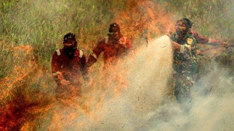 Indonesiske brannmenn forsøker å slukke en torvmyr-brann på øya Sumatra.