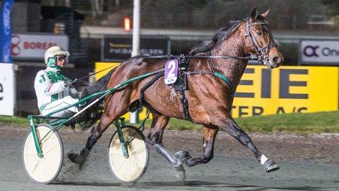Don Cash og Jeppe Juel strakk ikke til i V75-6 på Sørlandets travpark 2. november. Lørdag kveld blir hesten klar favoritt i V65-6 i Ålborg. Foto: Morten Skifjeld/Hesteguiden.com