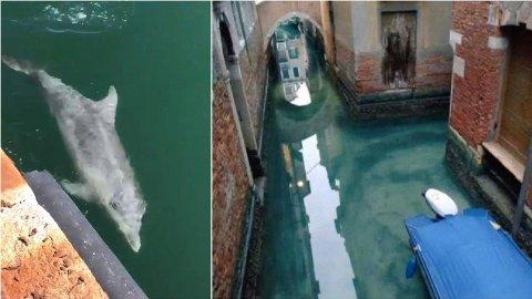 VANNET HAR KLARNET OPP: I en video delt på sosiale medier ser vi en delfin som noen påsto svømte i Venezias havnebasseng. Det viser seg å ikke stemme.