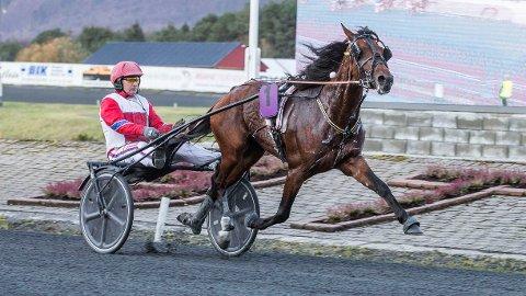 Noralf P. Brækken og Golden Dream M.E. I kveld kommer de ut i V64-1. Foto Morten Skifjeld/hesteguiden.com