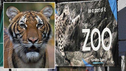 SMITTET: Tigeren Nadia som til daglig holder til i Bronx Zoo i New York har fått bekreftet koronasmitte.