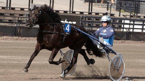 Kinge Svarten med sin trener og kusk Frode Hamre. Foto: Roger Svalsrød: Hesteguiden.com