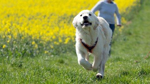 FORSIKRING: Flere og flere velger å forsikre kjæledyrene sine, viser tall fra Agria.