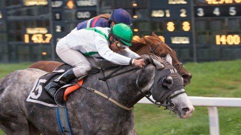 Kildare og rytter Carlos Lopez er blant favorittene i V5-4/V4-2 på Øvrevoll i kveld. Foto: Anders Kongsrud/www.hesteguiden.com.