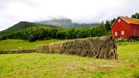 En reell effektivisering av jordbruket er i ikke egentlig mulig, skriver Anders Nordstat. Foto: Kyrre Lien / SCANPIX