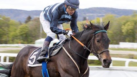 Cathrine Erichsen-trente Seaside Song er en av flere norsktrente hester under onsdagens galoppløp på Bro Park. Foto: Anders Kongsrud/www.hesteguiden..com.